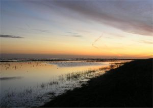 WSW Event: Wash Walk – 2pm to 4pm on the 9th and 10th of  August on Holbeach marsh