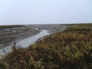 WSW Event: Salt marshes in Art and Literature (public talk) – 4pm to 5pm on Friday 10th August