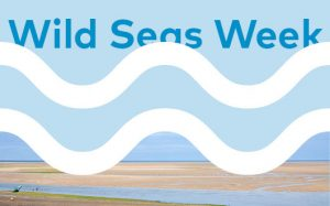 Wild Seas Week FULL EVENTS LIST – 3rd to 12th August