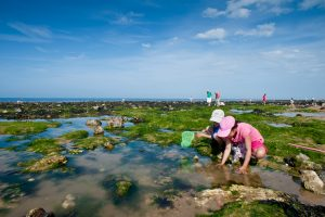 WSW Event: Rock Pool Rummaging – 11.30am to 1.30pm on Friday 10th of August in West Runton