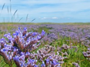 WSW Event: Love your saltmarsh activity – 1pm to 3pm on Friday 10th August